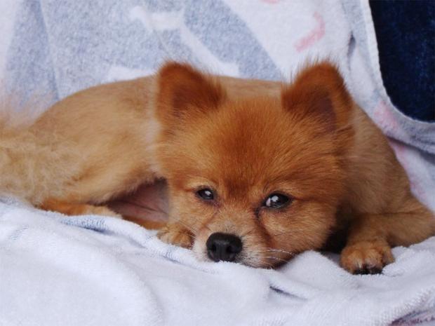web-fox-dog-ap.jpg