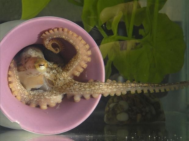 pg-16-octopus-2-pa.jpg