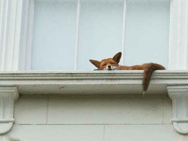 fox-london-johnson-one-use.jpg