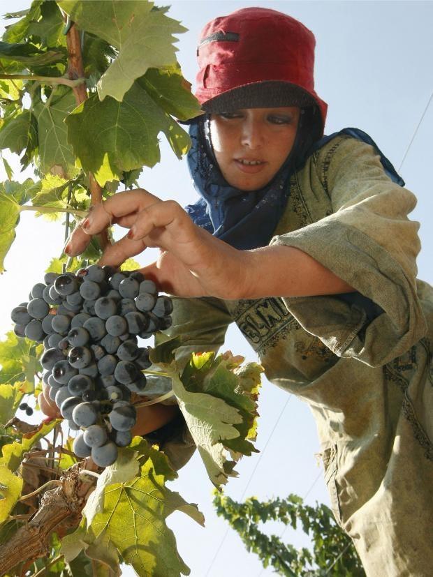 28-grapes-AFP-Getty.jpg