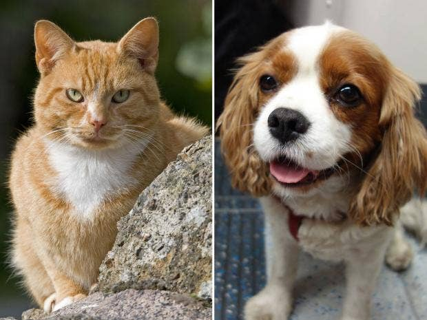 Why Are Dogs Better Than Cats Article