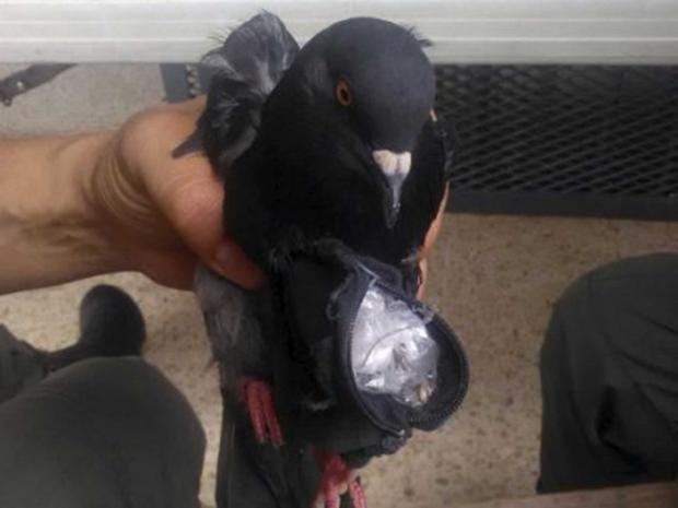 pigeon-reuters.jpg