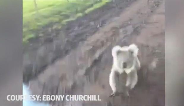 koalaquadbike.JPG
