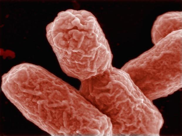 GMorganisms.jpg