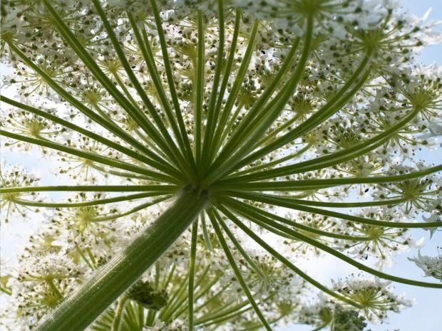 pg-6-alien-plants-1-pa.jpg