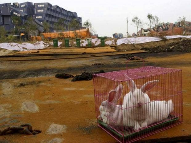 rabbit2-china2.jpg