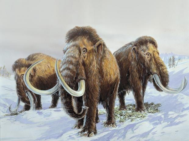 Mammoth-1-NHM.jpg