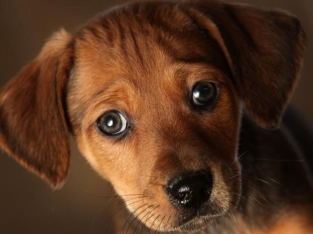 puppy-getty_1.jpg