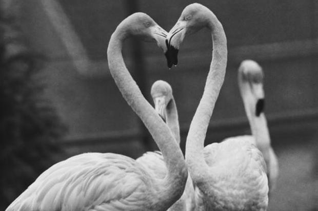 flamingoes_1.jpg