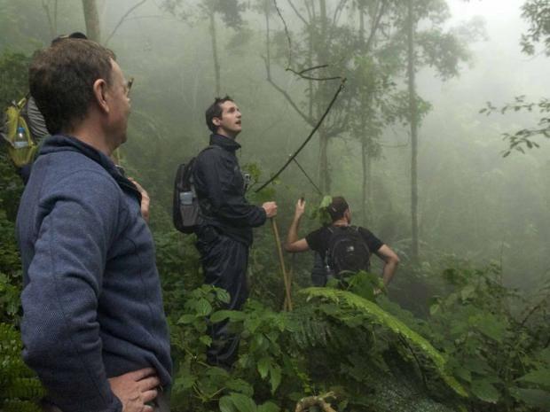 chimp-trekking-thomson.jpg