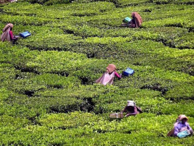 offer-tea-india-epa.jpg