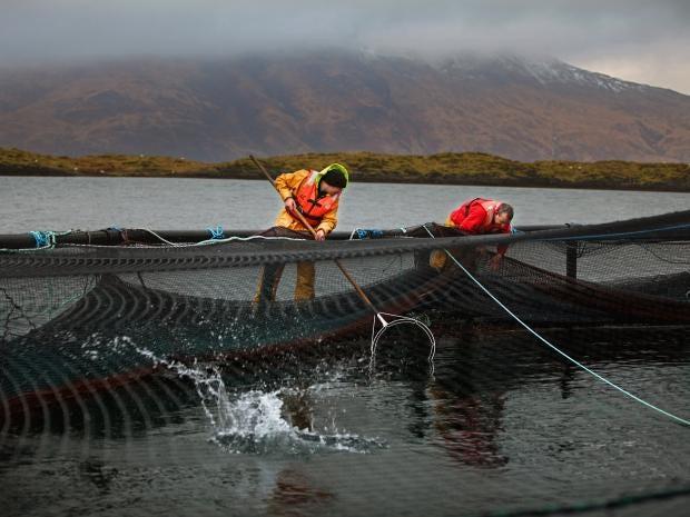 pg-16-scot-fish-farms-2-getty.jpg