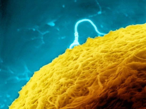 11-human-sperm-reuters.jpg