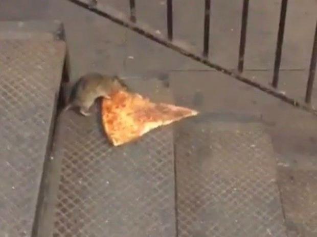 pizzarat.jpg