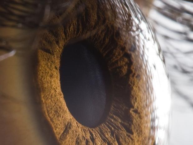 rexfeatures_1229148b-eye.jpg