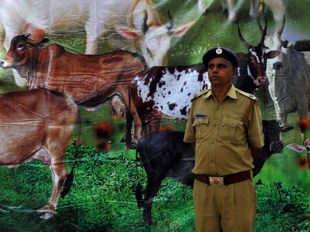 Holy-cow-protest-India.jpg