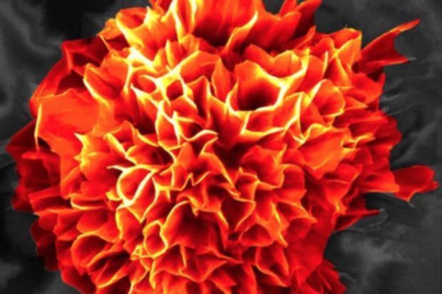 microflower.jpg