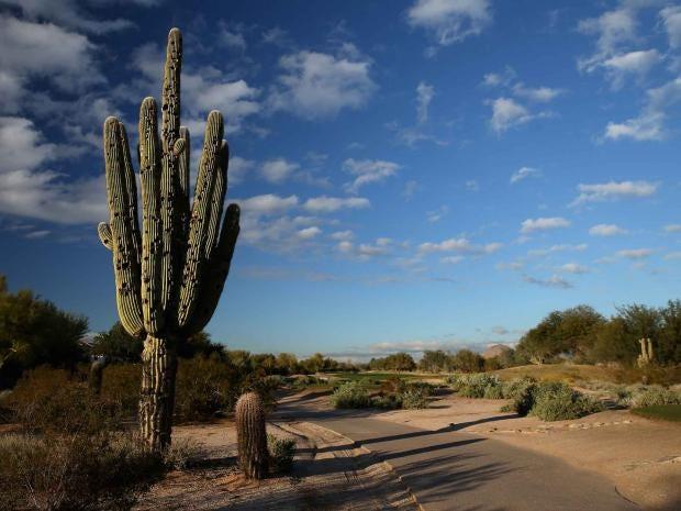 cacti-getty.jpg