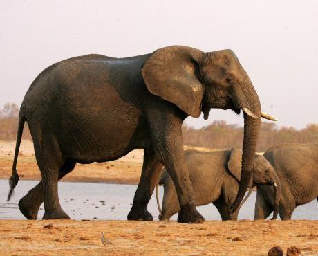 elephantzimbabwe.jpg