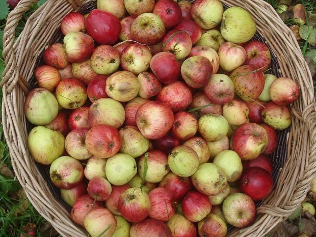 applelifestyle.jpg