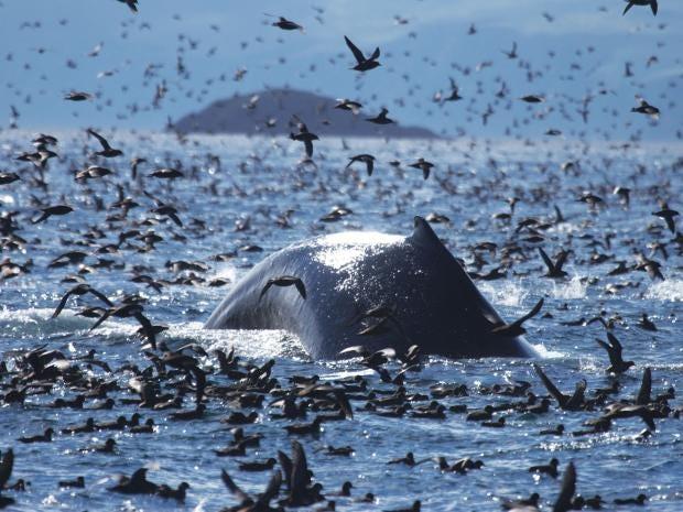 whale-press.jpg