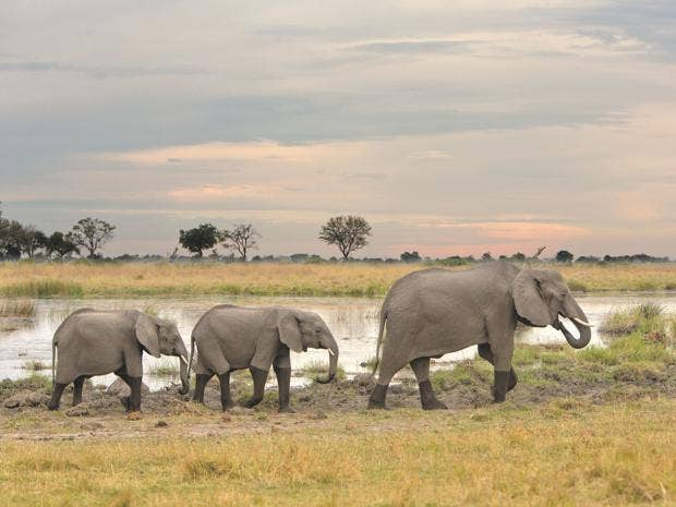 1Botswana-2.jpg