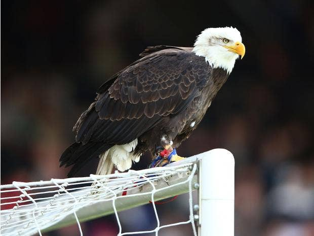 Kayla-the-eagle.jpg