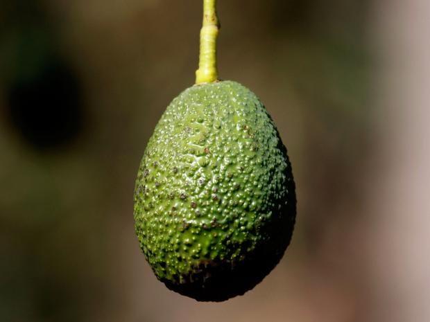 web-avocado-getty.jpg