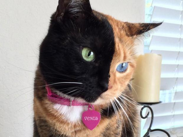 Résultats de recherche d'images pour «cat»