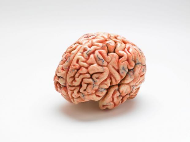 תוצאת תמונה עבור human brain