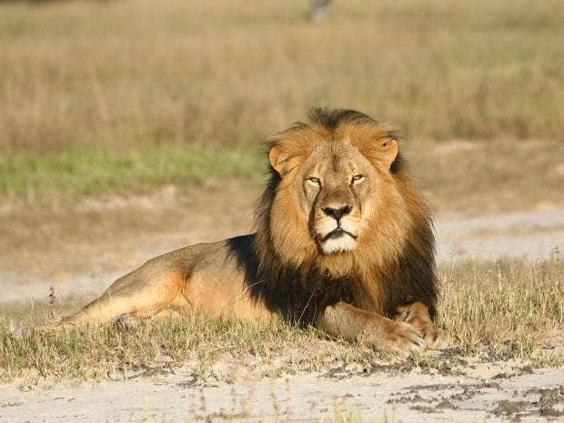 Zimbabwe court rules for local hunter in Cecil the lion case