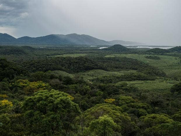 15-atlantic-rainforest-afpget.jpg