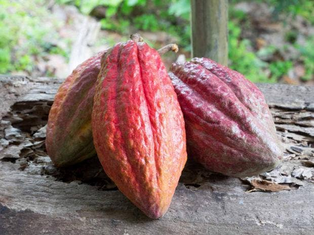 food-cocoa-pods-getty.jpg