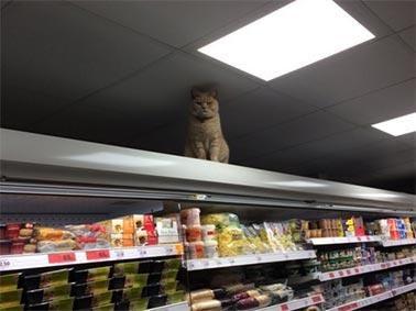 sainsburys-cat.jpg