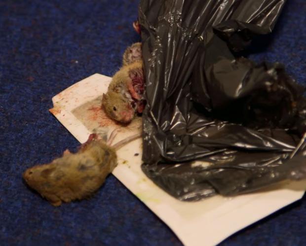 housing-block-rats.JPG