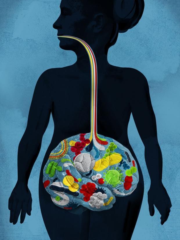 Digestive-system-sam-falconer.jpg