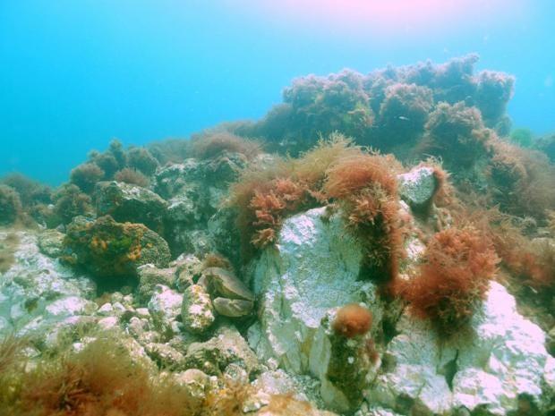 11-cromer-reef.jpg