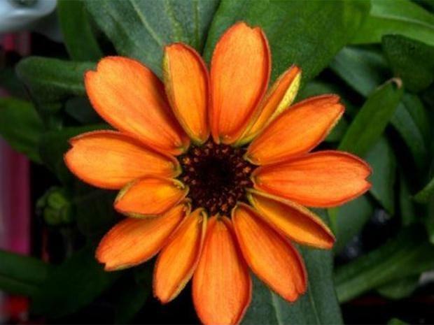 Space-Flower.jpg