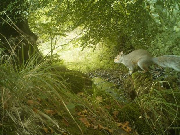 17-grey-squirrel.jpg