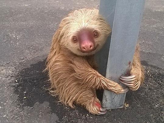 sloth-motorway-ecuador.jpg