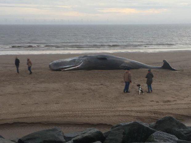 sperm-whale.jpg