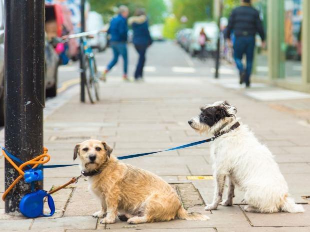 dogs-Michal-Krakowiak.jpg