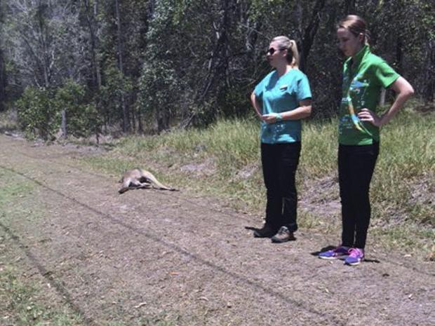 dead-kangaroo-brisbane-2.jpg