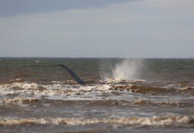Hunstanton-whale-February3.jpg