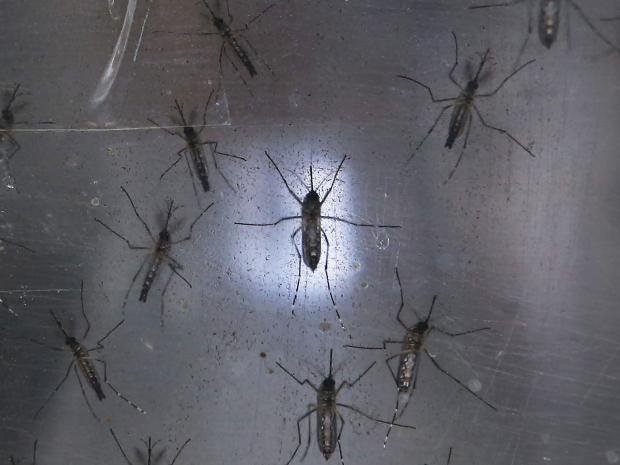 zika-rf-getty.jpg