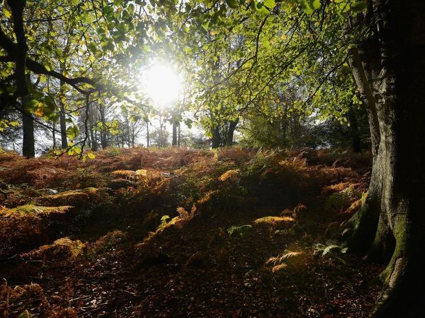 Trees-Autumn-Getty.jpg
