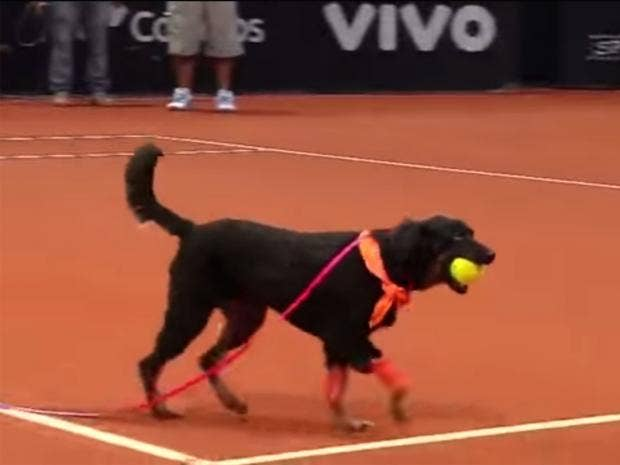 ball-dog.jpg