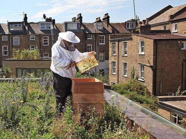 pg-38-beehives-getty.jpg