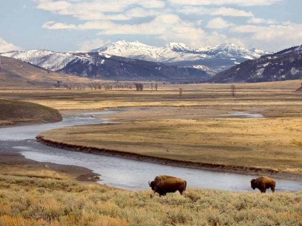 Yellowstone National Park springs to life: An encounter with the West at  its wildest