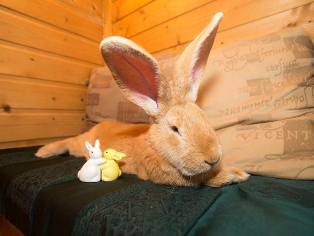 giant-rabbit.jpg
